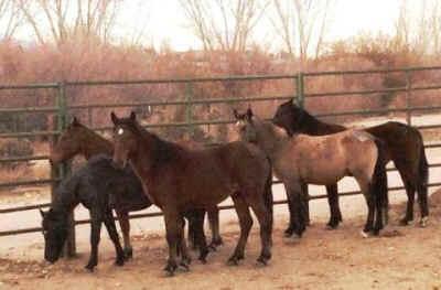 wild horses rescued