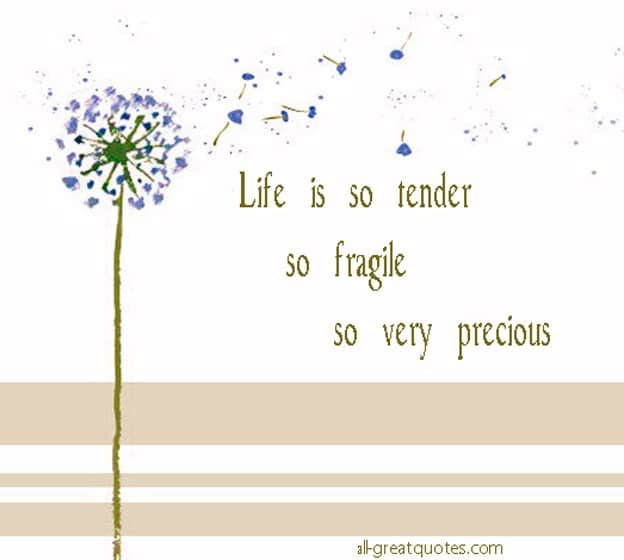Life Is So Tender So Fragile So Very Precious