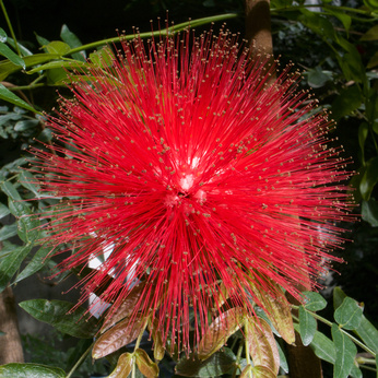 Winter Blooming Plants Winter Flowers For Australia