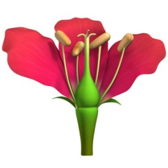 Flower Parts Diagram Without Labels Clam Internal Anatomy The Of A Involved In Sexual Reproduction Unlabelled