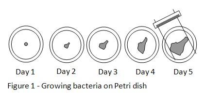 Microbes petri dish experiment (lab report