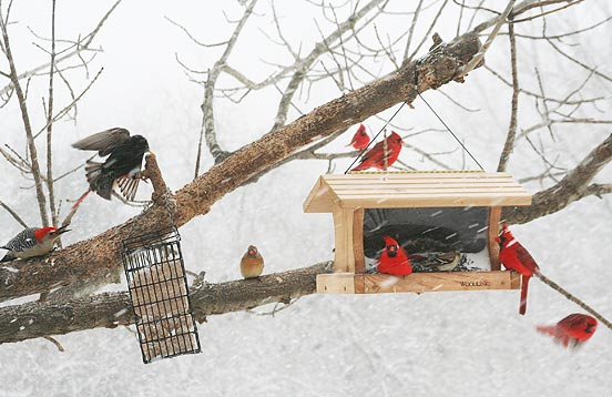 Fall Bird Feeder Wallpaper Seeds And Shelter Birding Basics