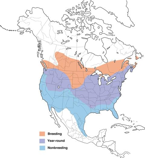 image of range map for American Goldfinch