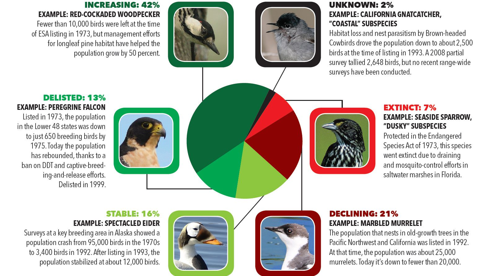 Report Shows The Endangered Species Act Works For Birds