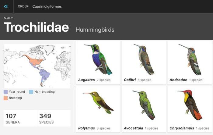 Diversitatea speciilor de colibri