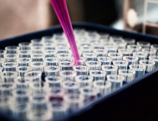 Stammzellenforschung Endometrium