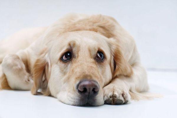 depresion in dogs
