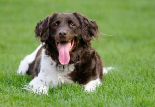 Symptoms That Your Dog Is In Pain