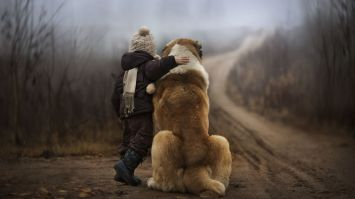 What To Do When Dog Dies