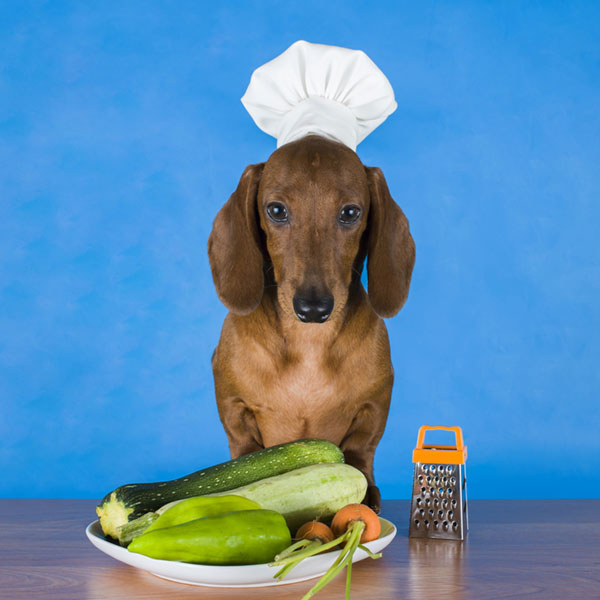 can-dogs-be-vegetarians-03