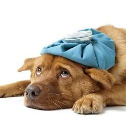 Your Dog Has A Cold
