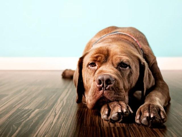 Symptoms of Dog Depression