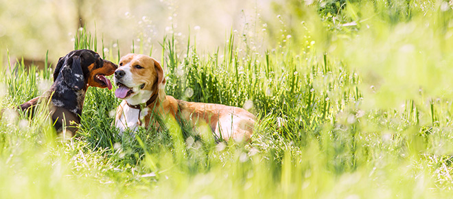 Dog Insurance Policies