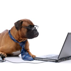 Why You Should Take Your Dog To Work