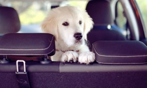 The Best Dog Travel Tips