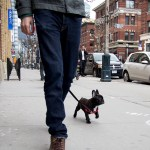 Safely Walk Your Dog In The Big City