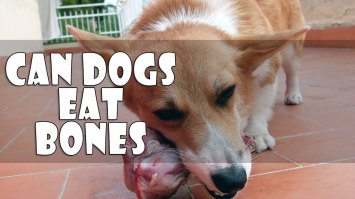 Can Dogs Eat Bones