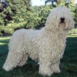 Some Pretty Weird Dog Breeds