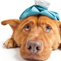Pet medicine online