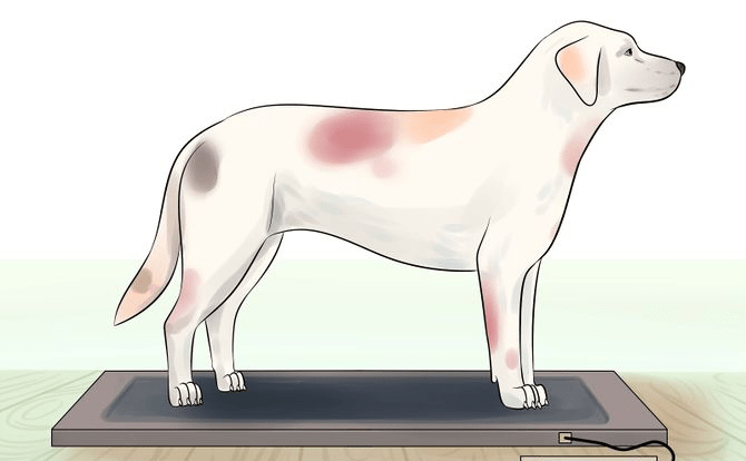 Your Dog Should Maintain a Healthy Weight