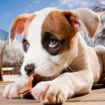 Dog Life Insurance