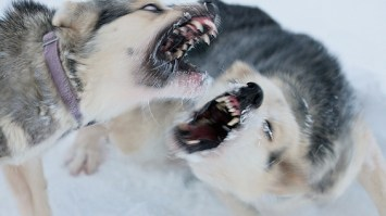 Why your female dogs fight