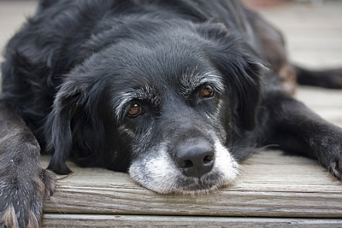 Reasons for Adopting an Older Dog
