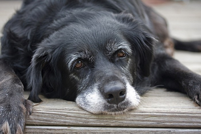 Reasons for Adopting an Older Dog
