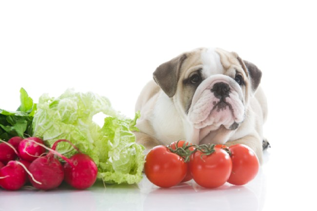 Good vegetables for dogs