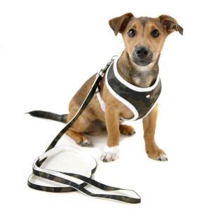 Should I Use a Dog Harness?