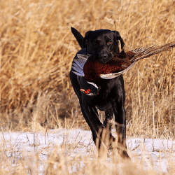 12 Best Hunting Dog Breeds