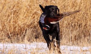 12 Best Hunting Dog Breeds