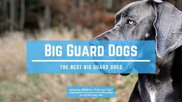 Big Guard Dogs