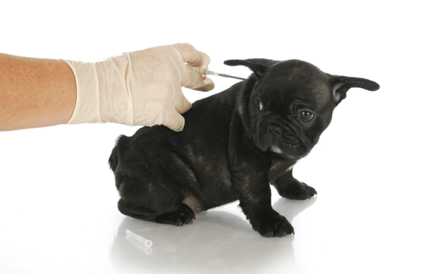 Diabetic dogs symptoms