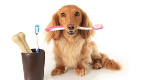 Is toothpaste bad for dogs