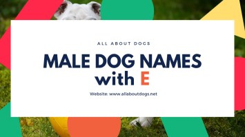 Male Dog Names with E