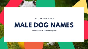 male dog names