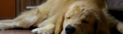 Sleep deprivation in dogs