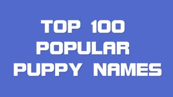 Top 100 Popular Puppy Names