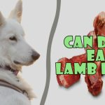 can dogs eat lamb bones