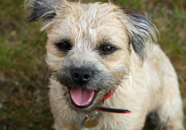 Small Hypoallergenic Dogs