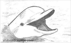 Playful Dolphin Drawings