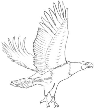 Powerful Eagle Pencil Drawings