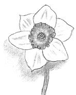 Flower Drawings In Pencil