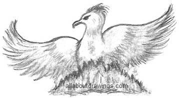 Drawings of The Phoenix Bird