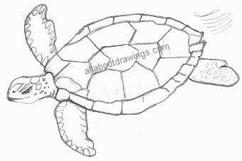 Turtle Drawings