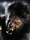 Del Toro Wolfman