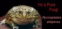 I'm a Pixie Frog!