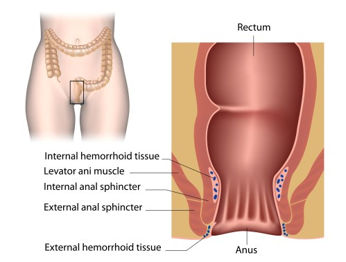 small resolution of the anal canal anatomy