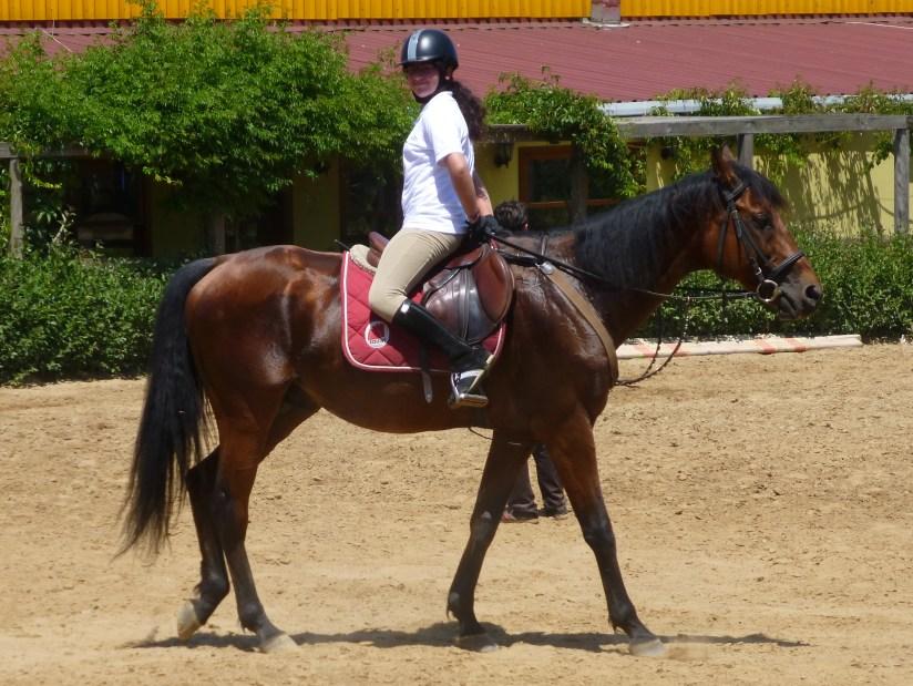 Riding a Horse Backwards